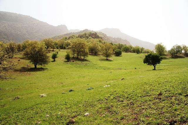 استان: چهارمحال و بختياري شهرستان:كيار بخش:ناغان روستای:شهرك دورك